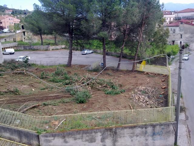 Pini Abbattuti giardino ex scuola elementare