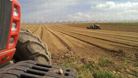 AZIENDA AGRICOLA MIRRA EBOLI terreni