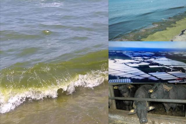 Mare sporco Battipaglia-bufale-Impianti serricoli