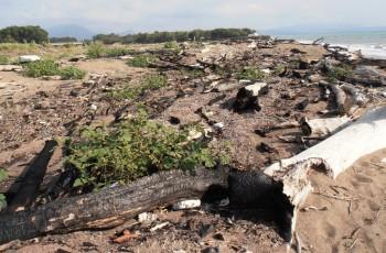 Foce Sele - tronchi in spiaggia