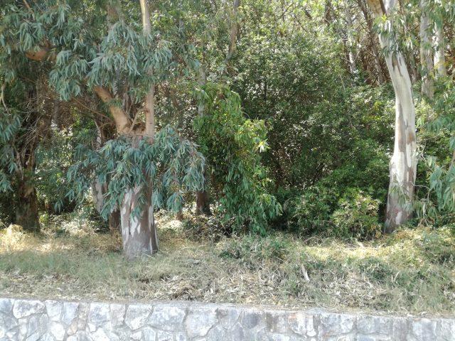 Pineta Laura di Paestum