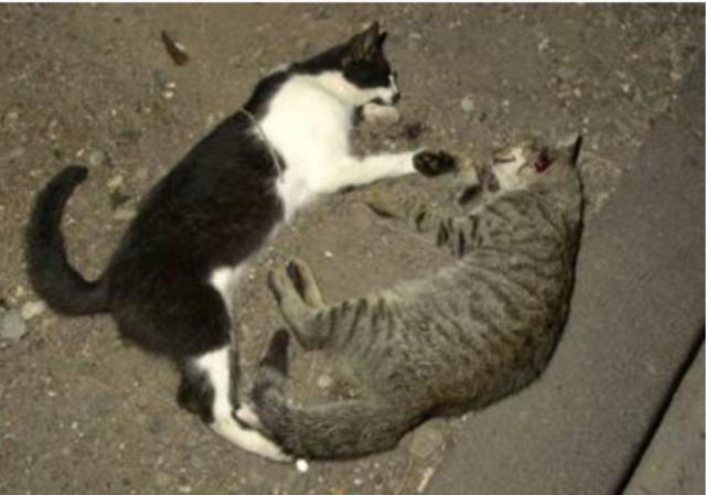 animali avvelenati a Battipaglia