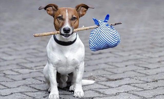 Cane abbandonato cerca padrone