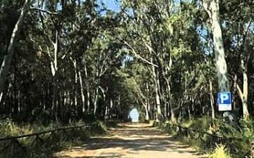 pineta fascia costiera