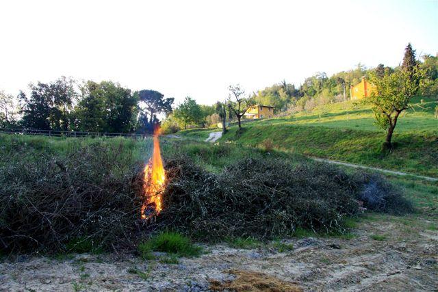 potature bruciate