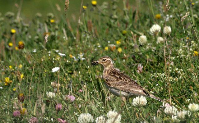 uccelli-biodiversità